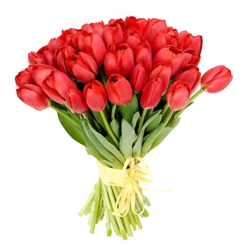 Букеты тюльпанов красных, букеты шарлотта