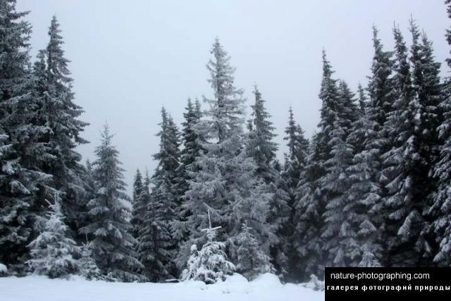 скачать фото пейзажи природы