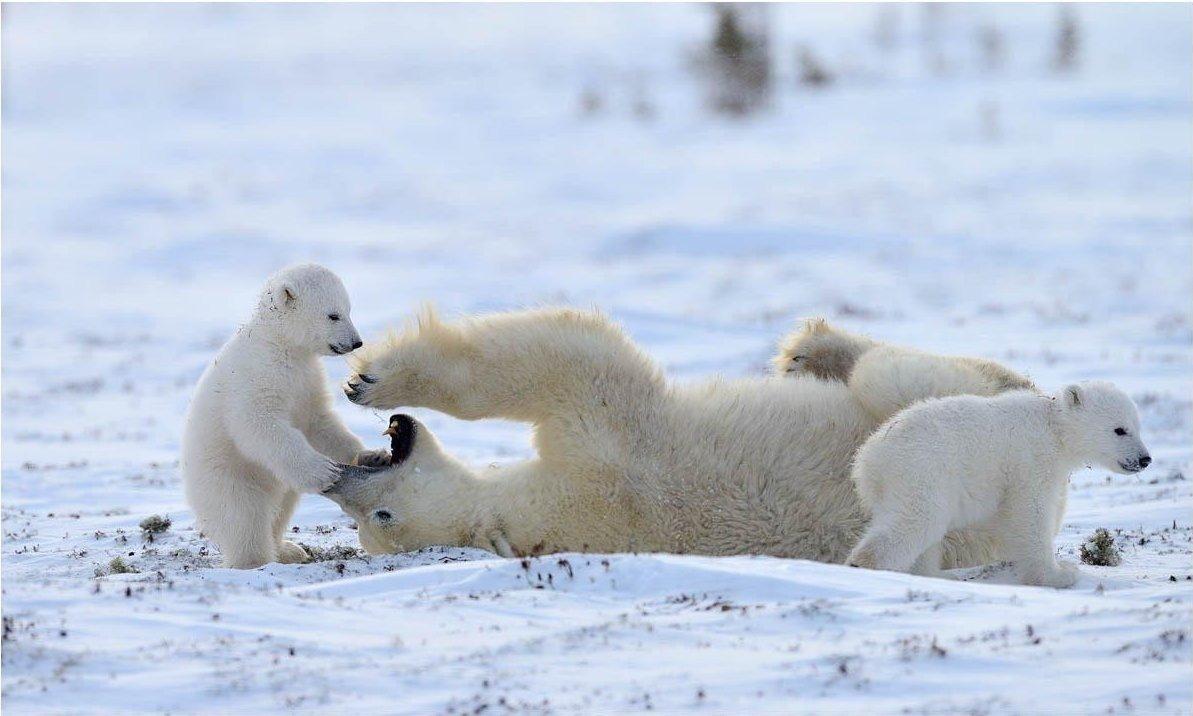 Смотреть фотографии пингвинов и белых мишек самом