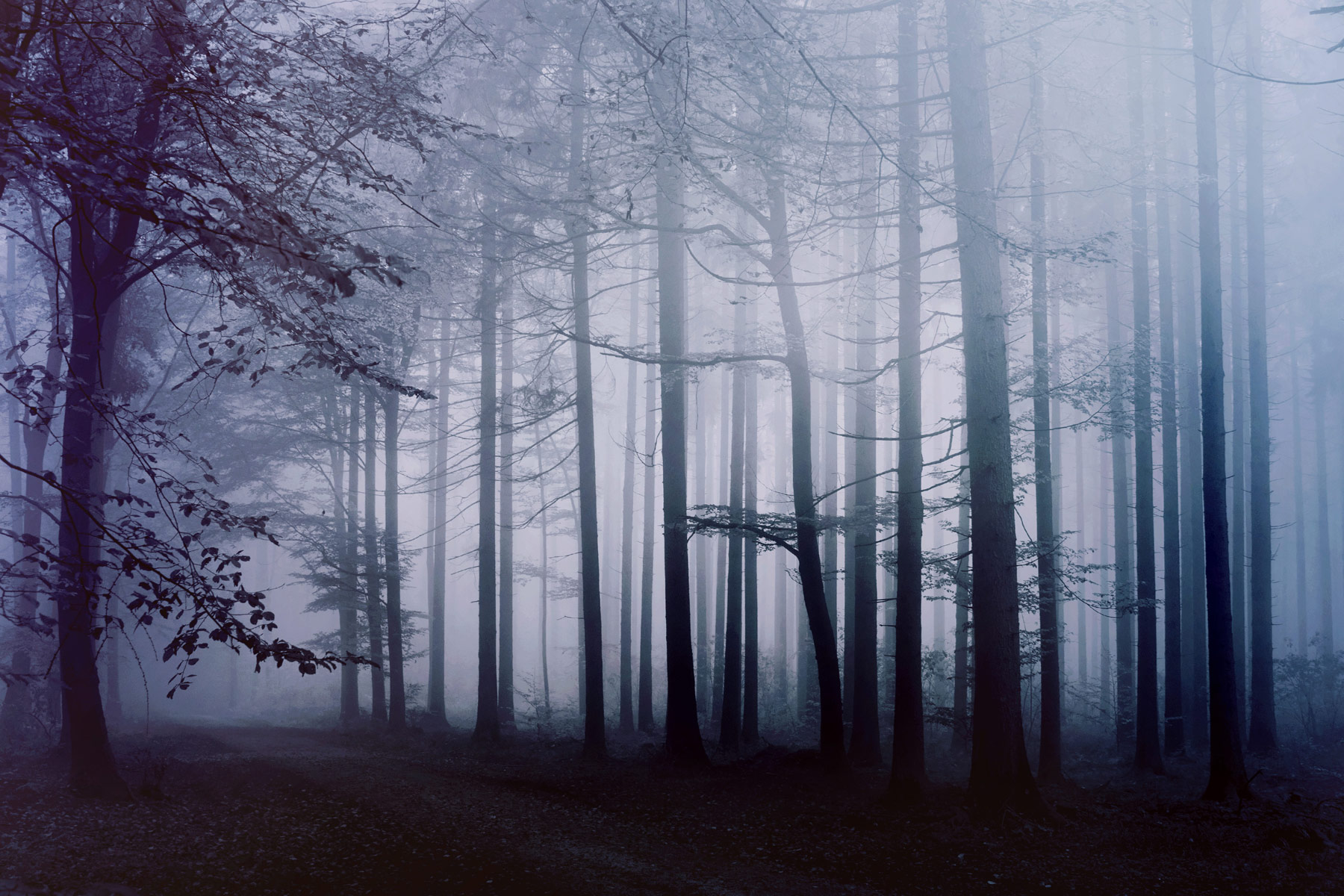 фото тумана в лесу