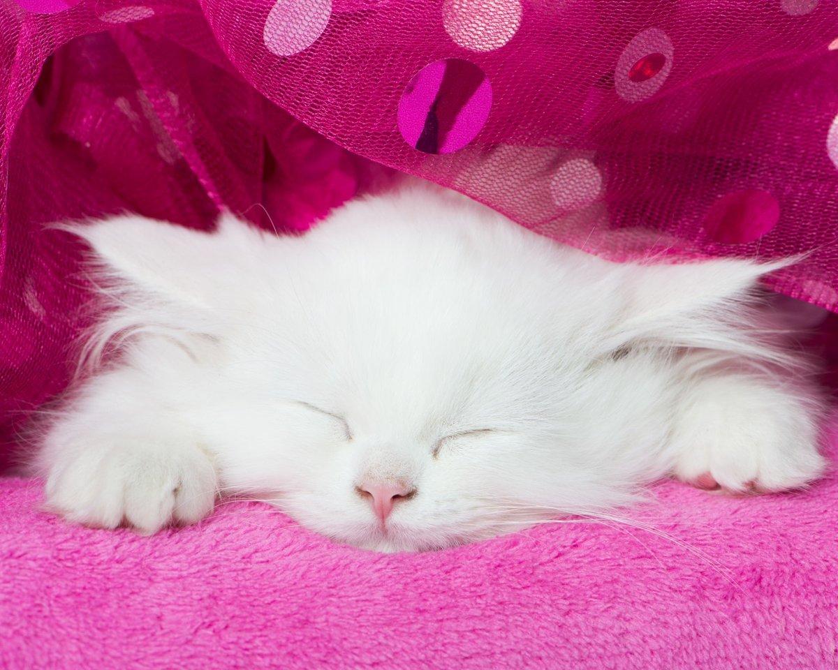 Открытки кошки белые, поздравления открытки