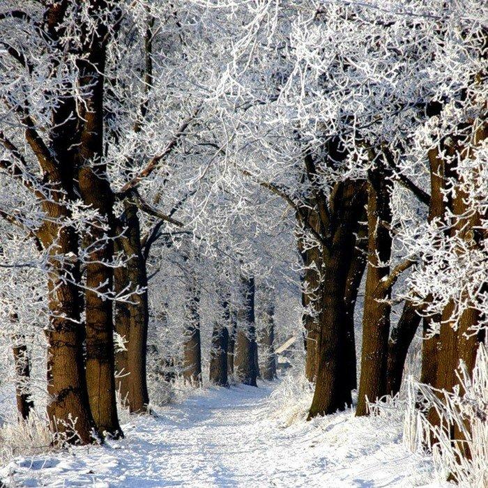 Анимационные картинки природа зима