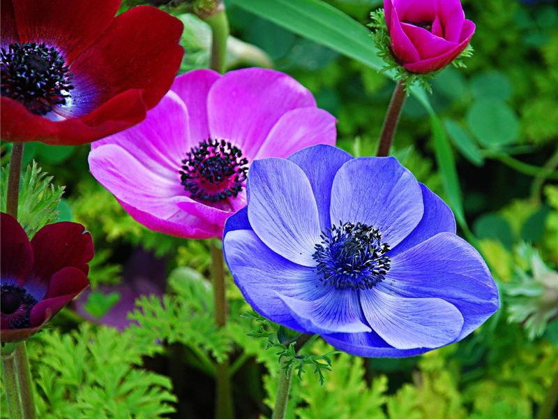 Картинка садовые цветы, поздравляем шарами супер