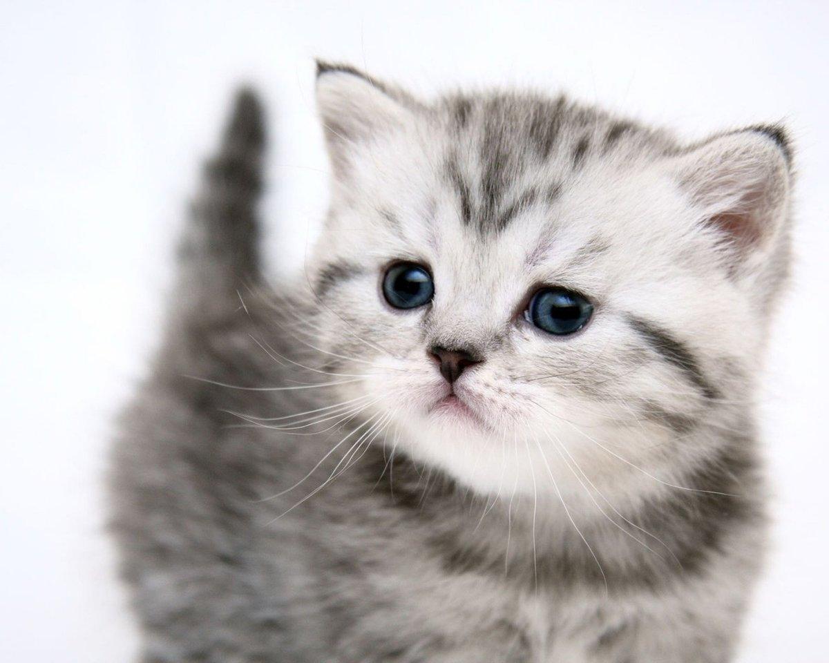 Именами для, картинки животных котов