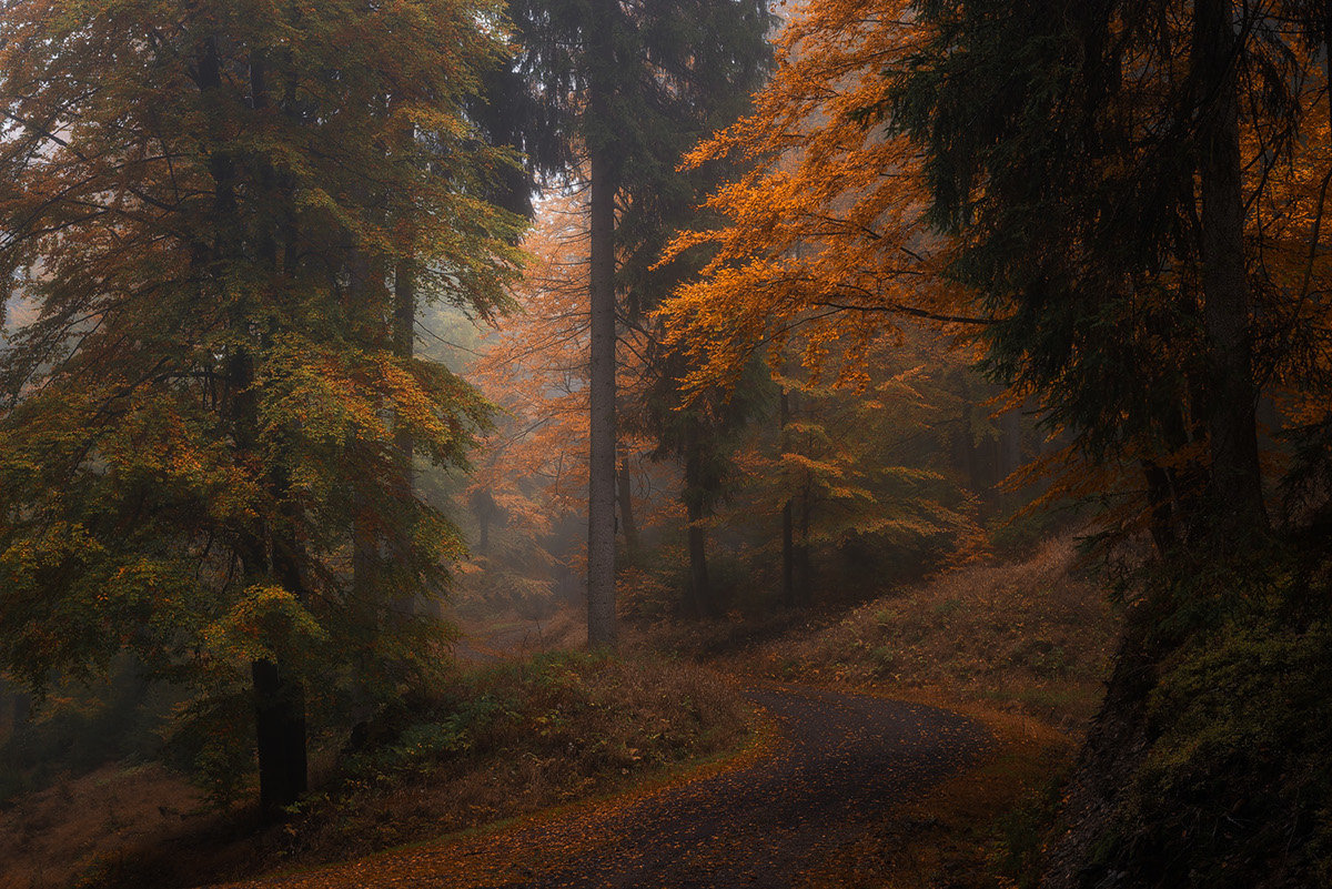 A trip through the mystic woods of the Thuringian Forest on a rainy autumn day.