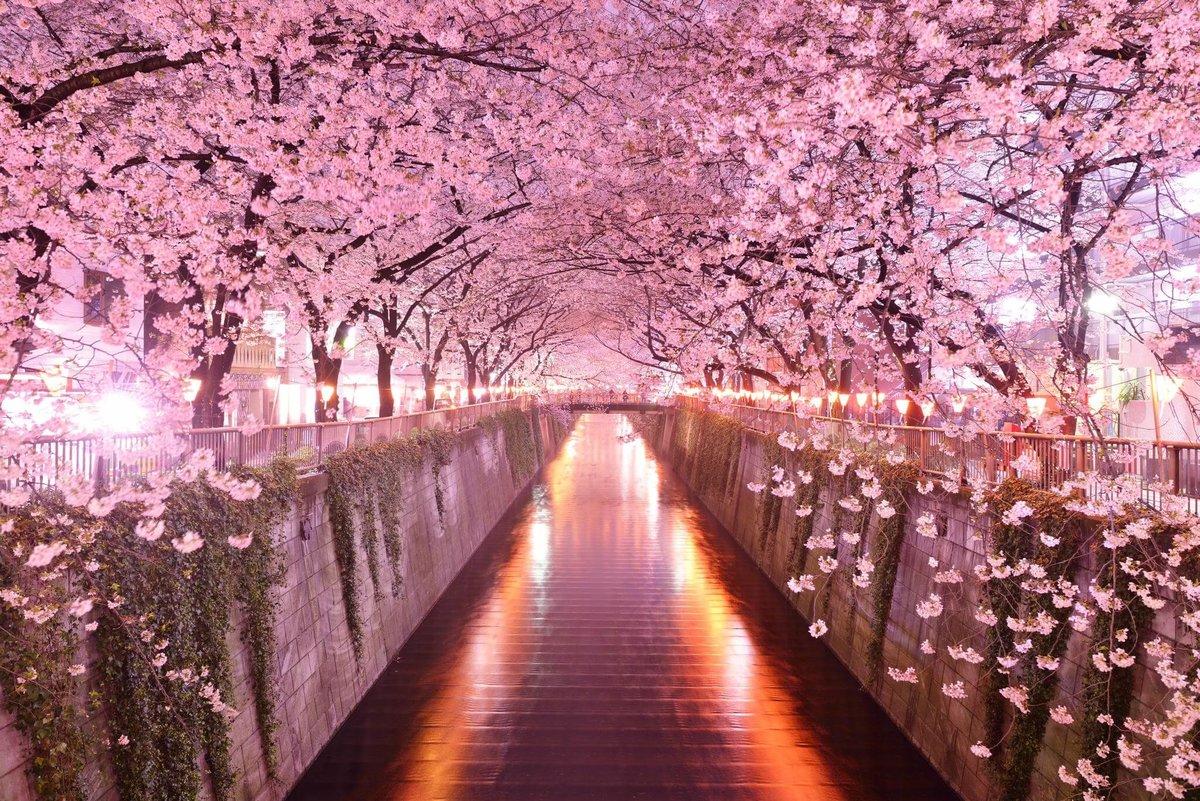 Картинки, картинки японской сакуры