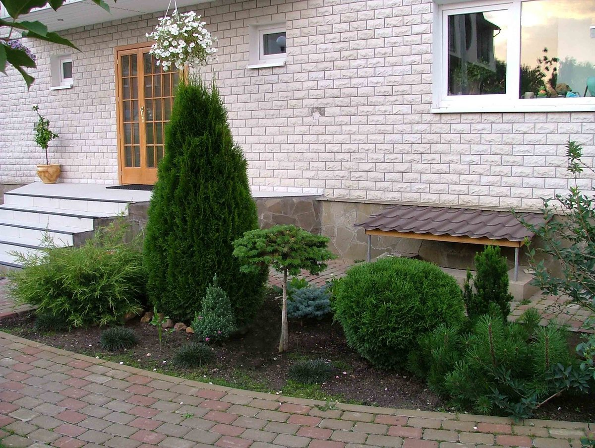 российском… можно ли сажать можжевельник во дворе дома отлично впитывает отводит