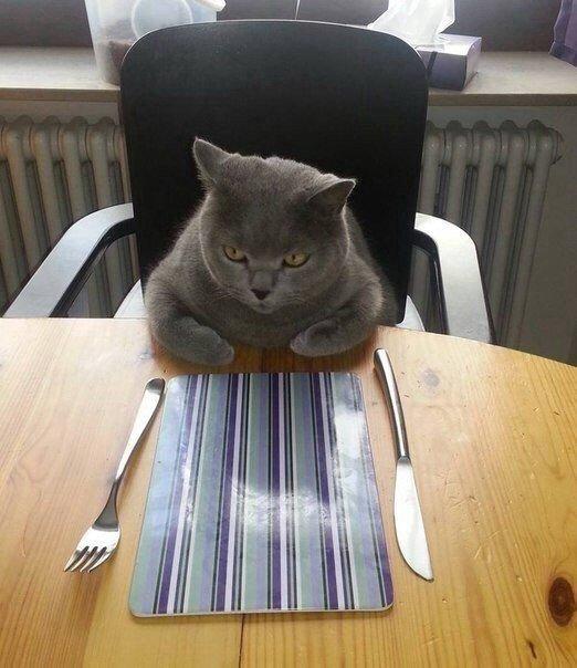 Ну и где моя еда?