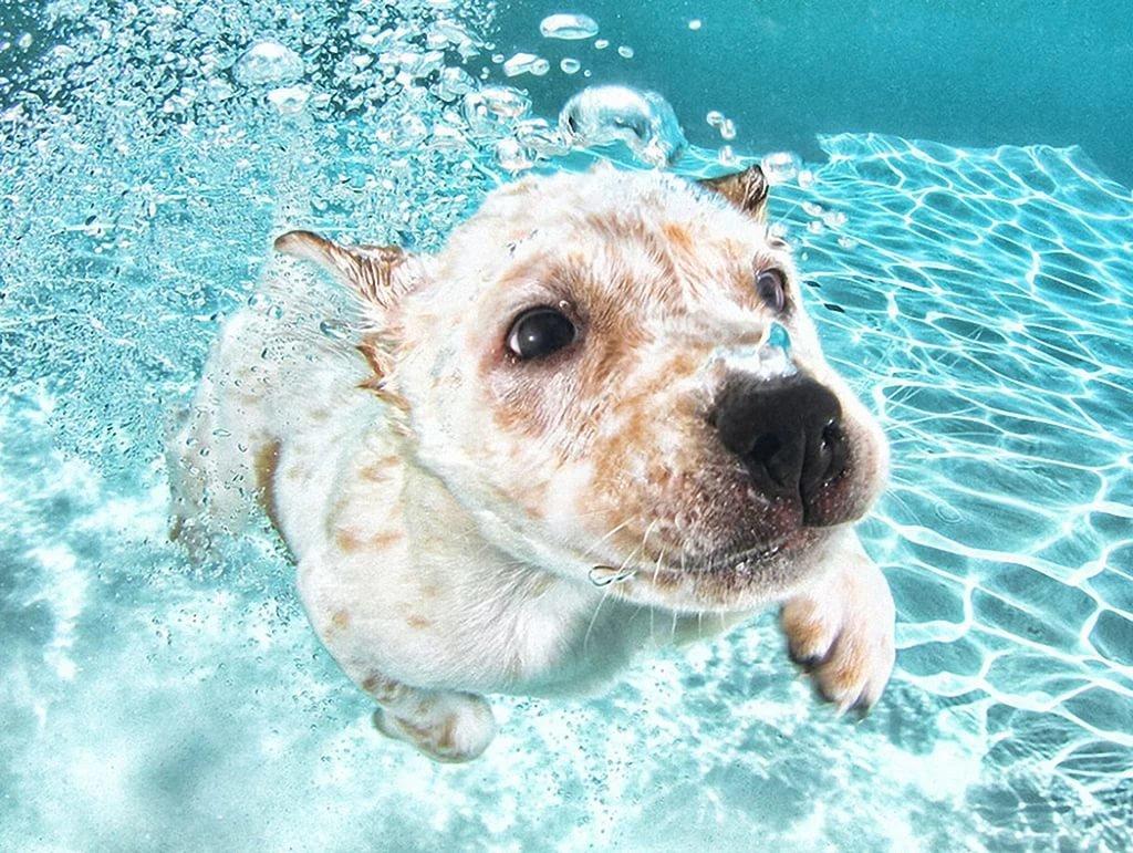 смешные картинки животных в воде