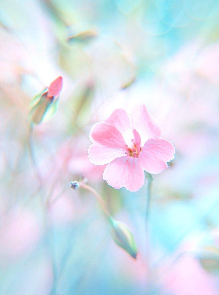 Картинка пастельные цветы