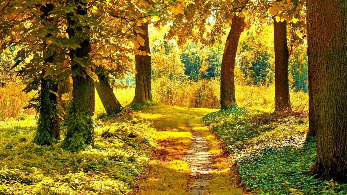 Картинки анимашки осенний лес