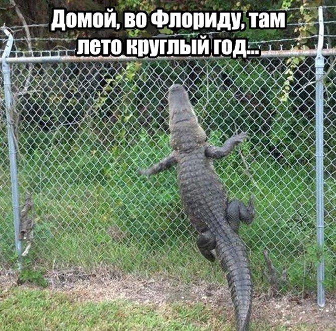 Домой, во Флориду #смех #мем #прикол #демотиватор #шутка #хохма #юмор