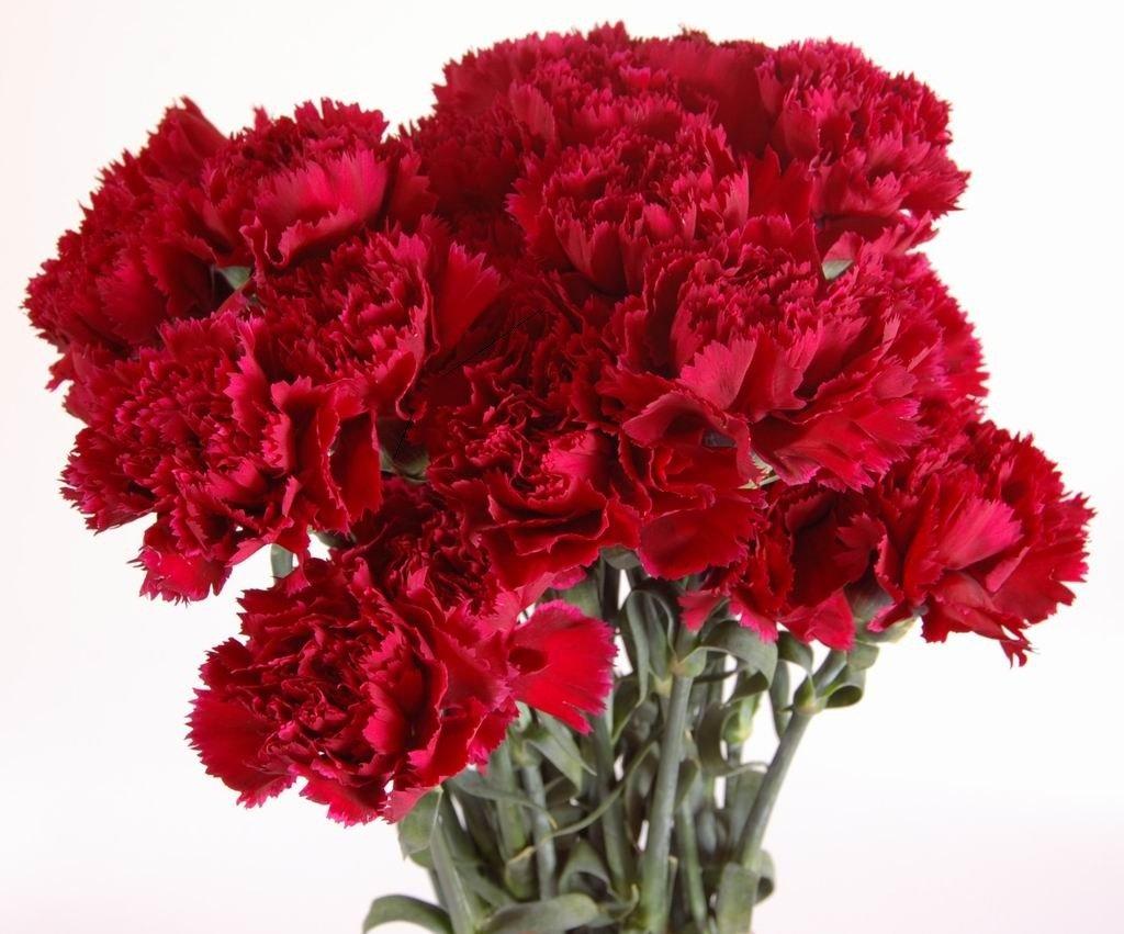 Картинки с красивым букетом цветов гвоздики