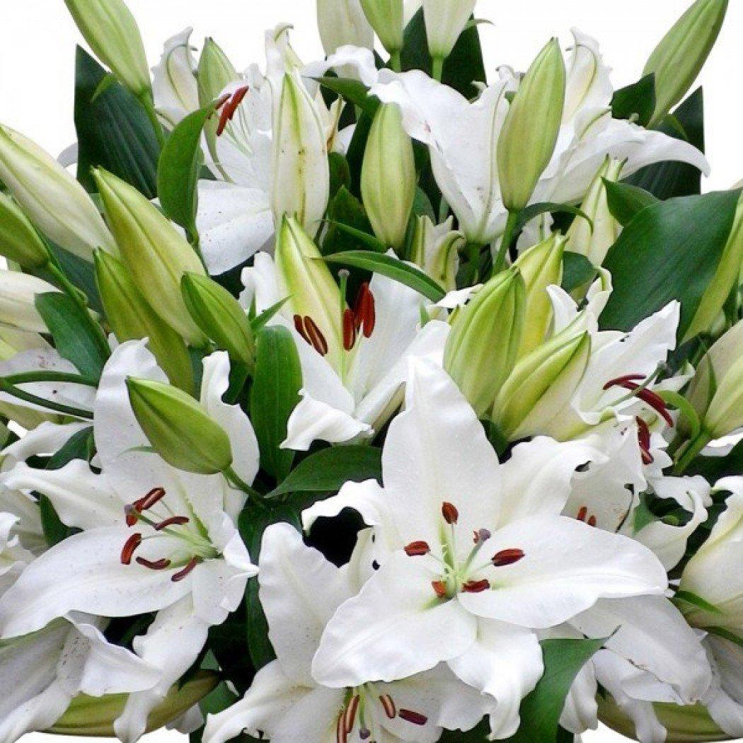 Днем рождения, открытки лилии белые
