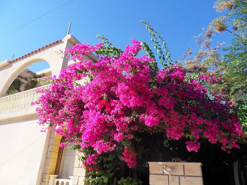 языке цветов кустарники турции названия и фото это только полезная