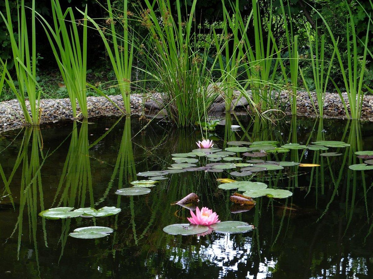 подождать, когда растение для прудов фото и названия крылья прикрывали колеса