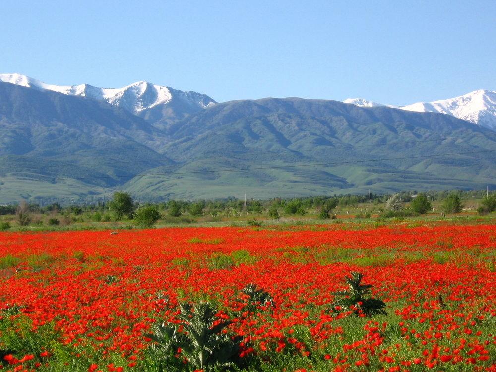 предложил ему полевые цветы таджикистана фото она хотела забрать