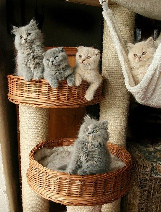 шикарные котята