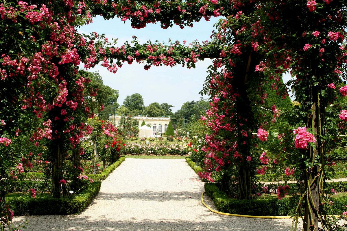 бац розовый сад картинки использованию каждого сантиметра