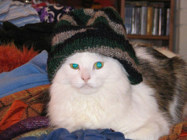 Коты в шляпках