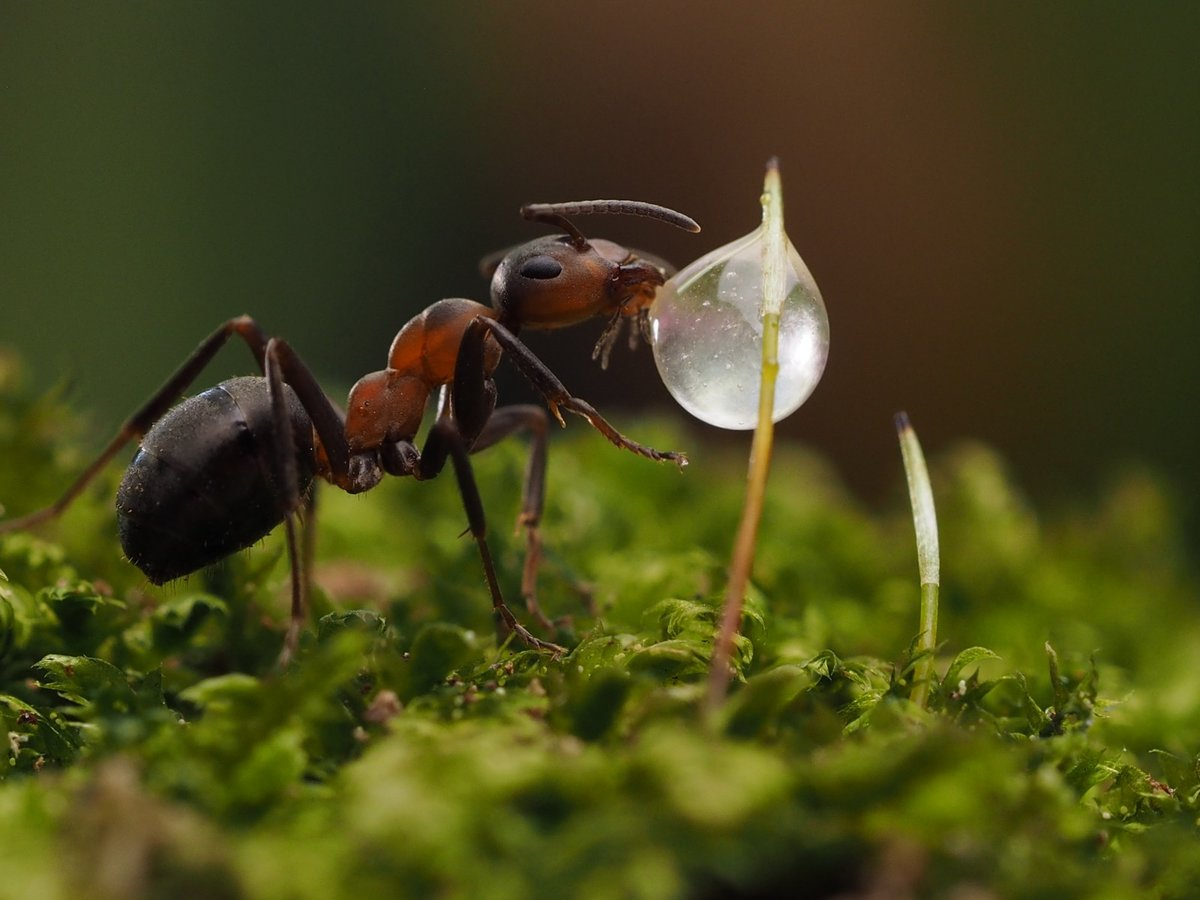 Картинки муравьи, дмб сыну навруз