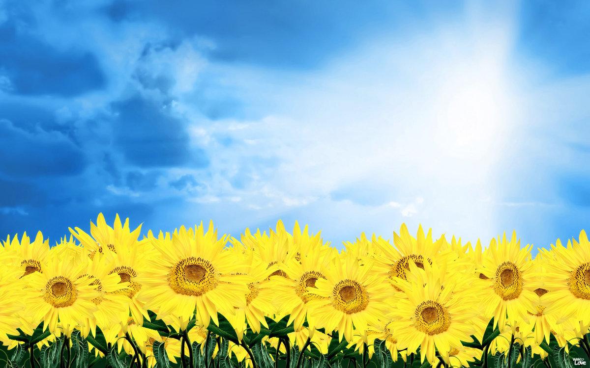 Звуком, открытка небо и солнце