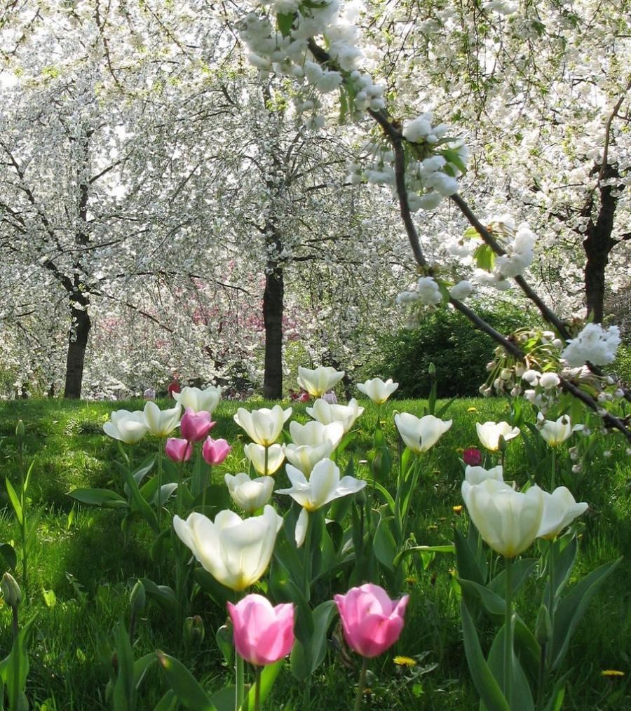 Фото краснодара весной