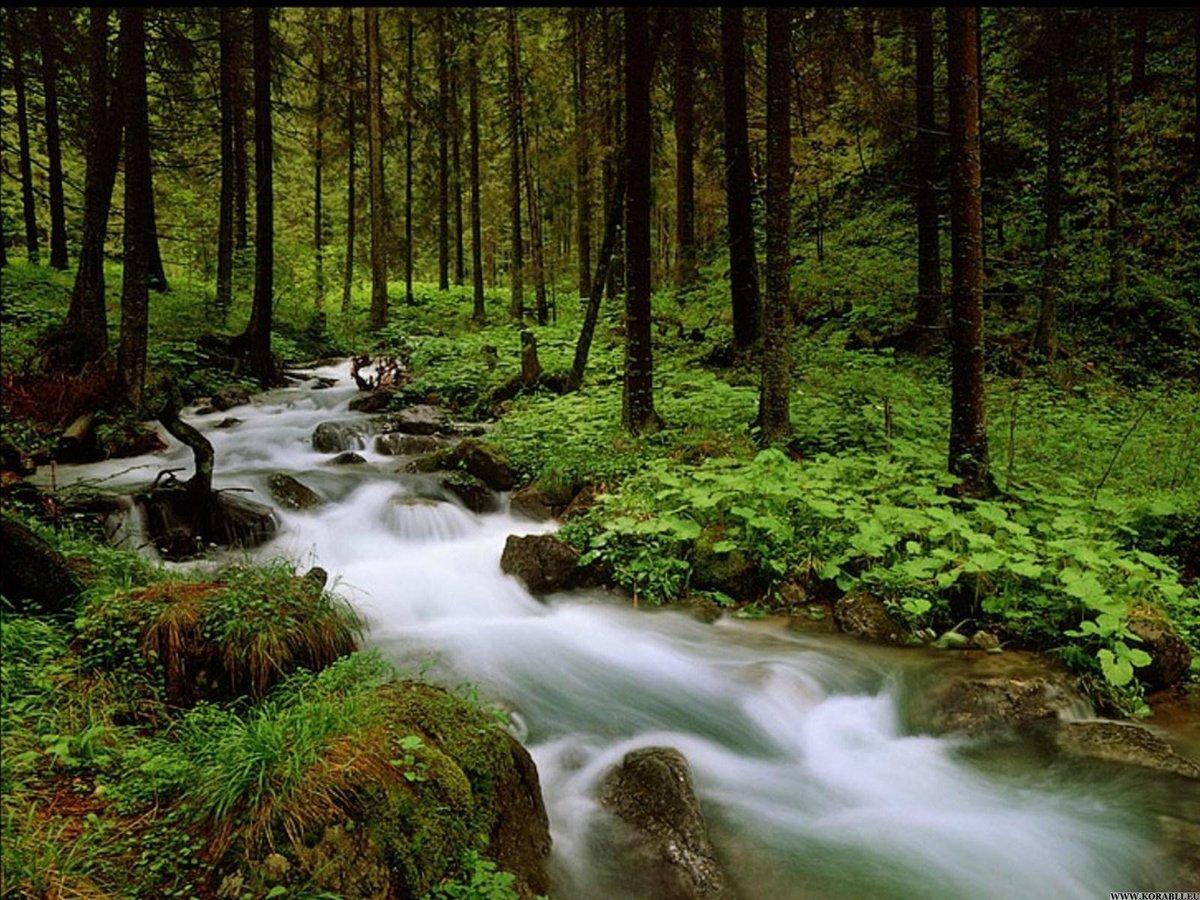 фото ручей в лесу тут буду постить