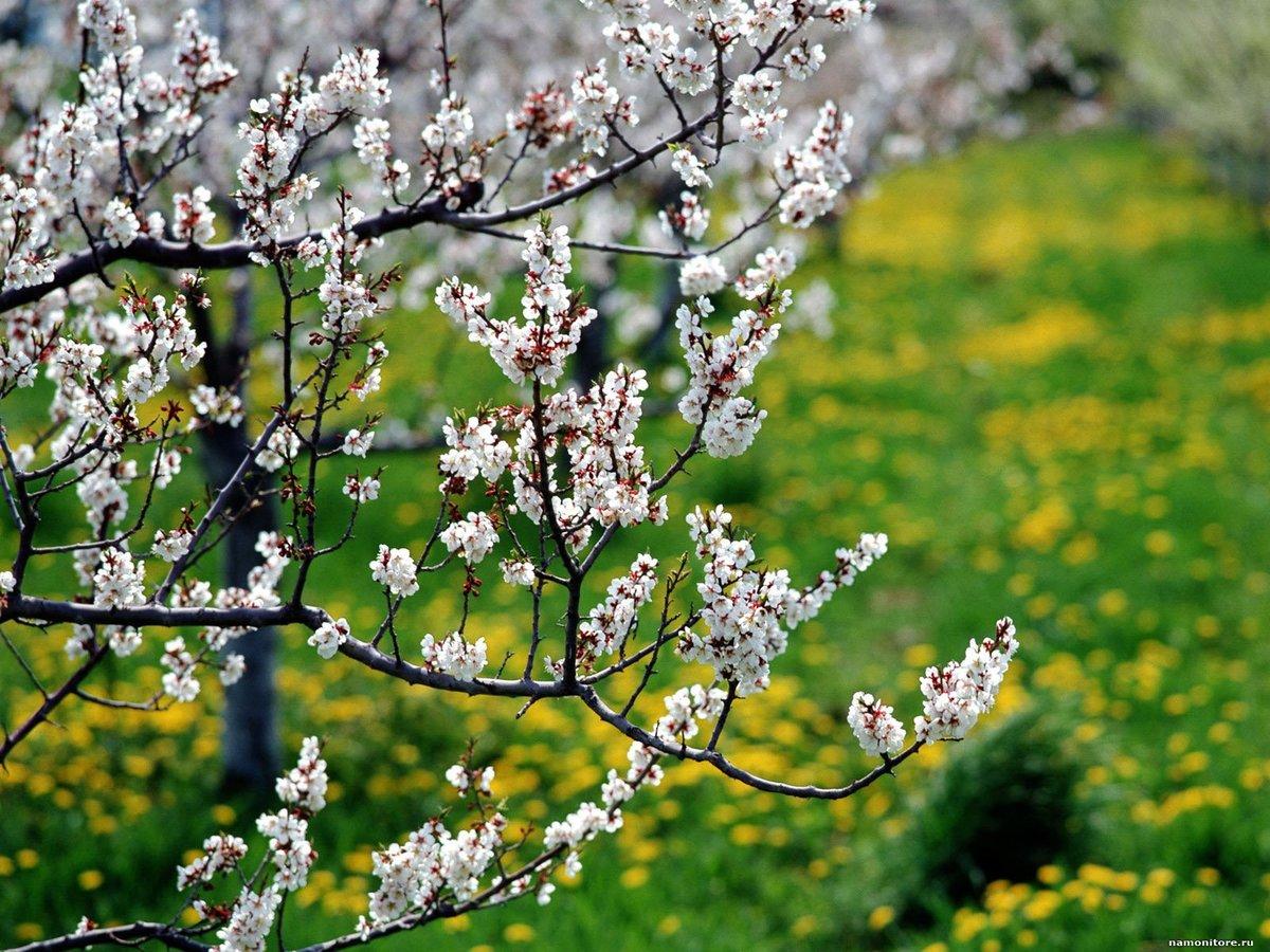 Картинки весны лета