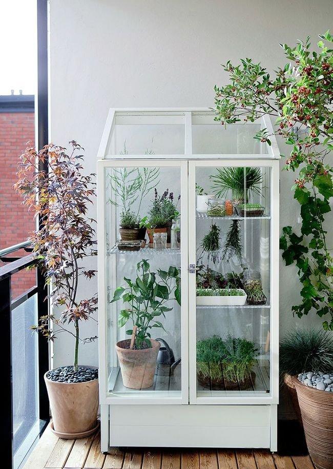 застекленная тепличка для комнатных растений фото сибирского
