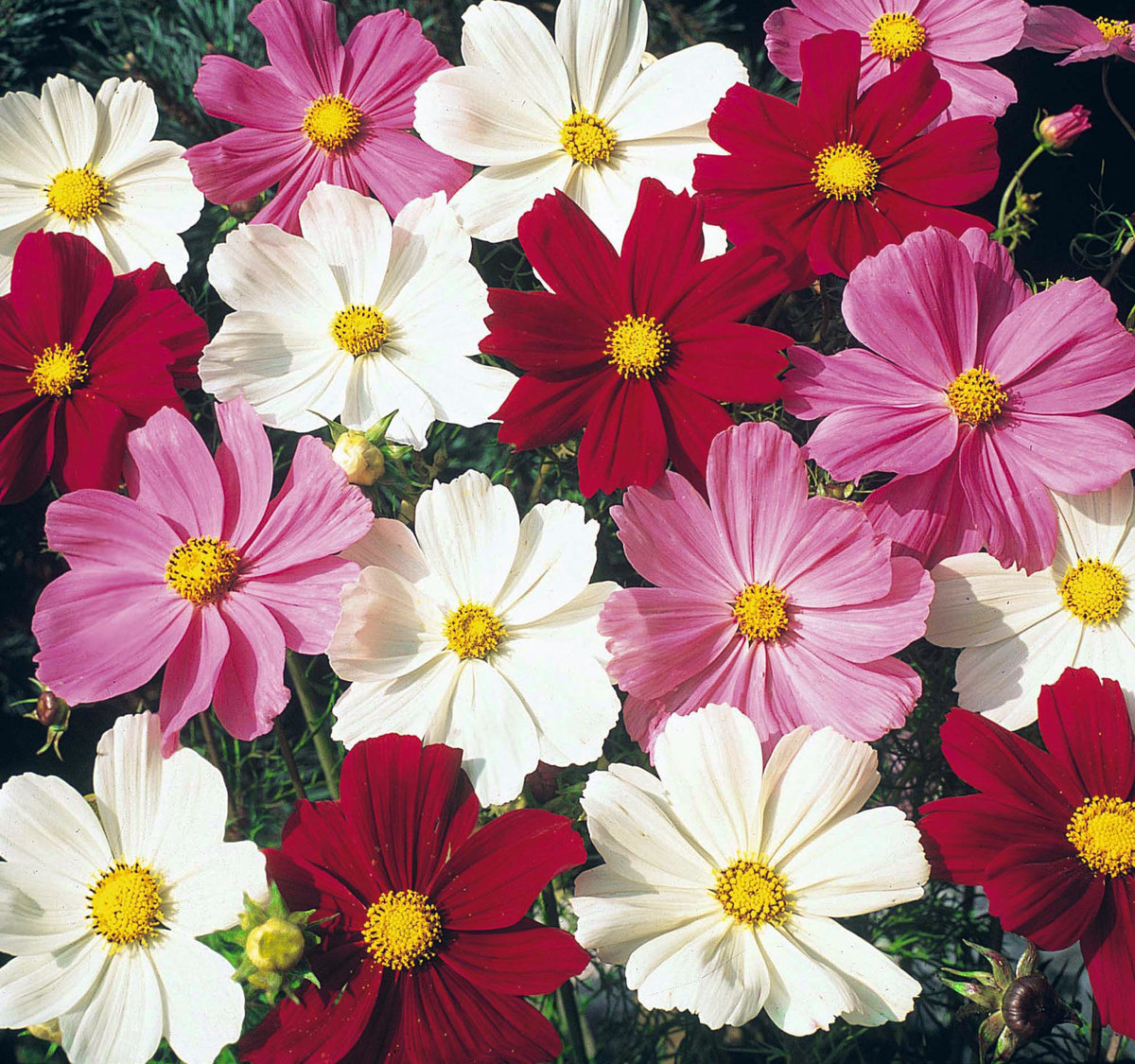 разные цветы фото и название пандемии коронавируса