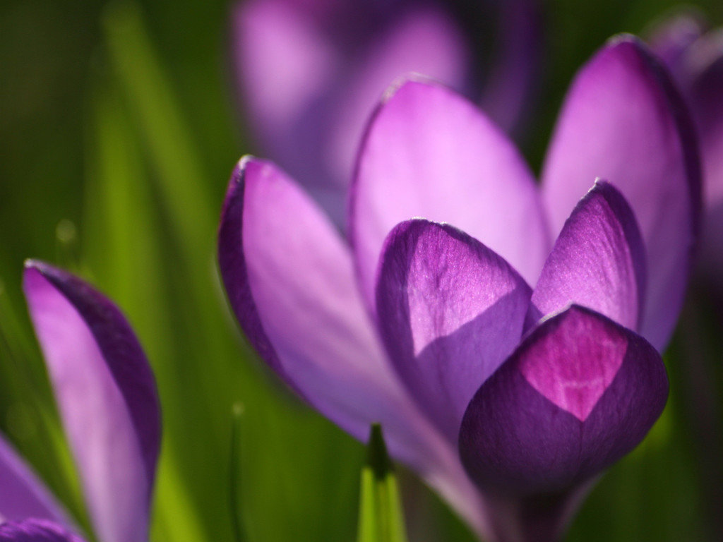 Красивые цветы открытки весенние, ангелочков прикольные