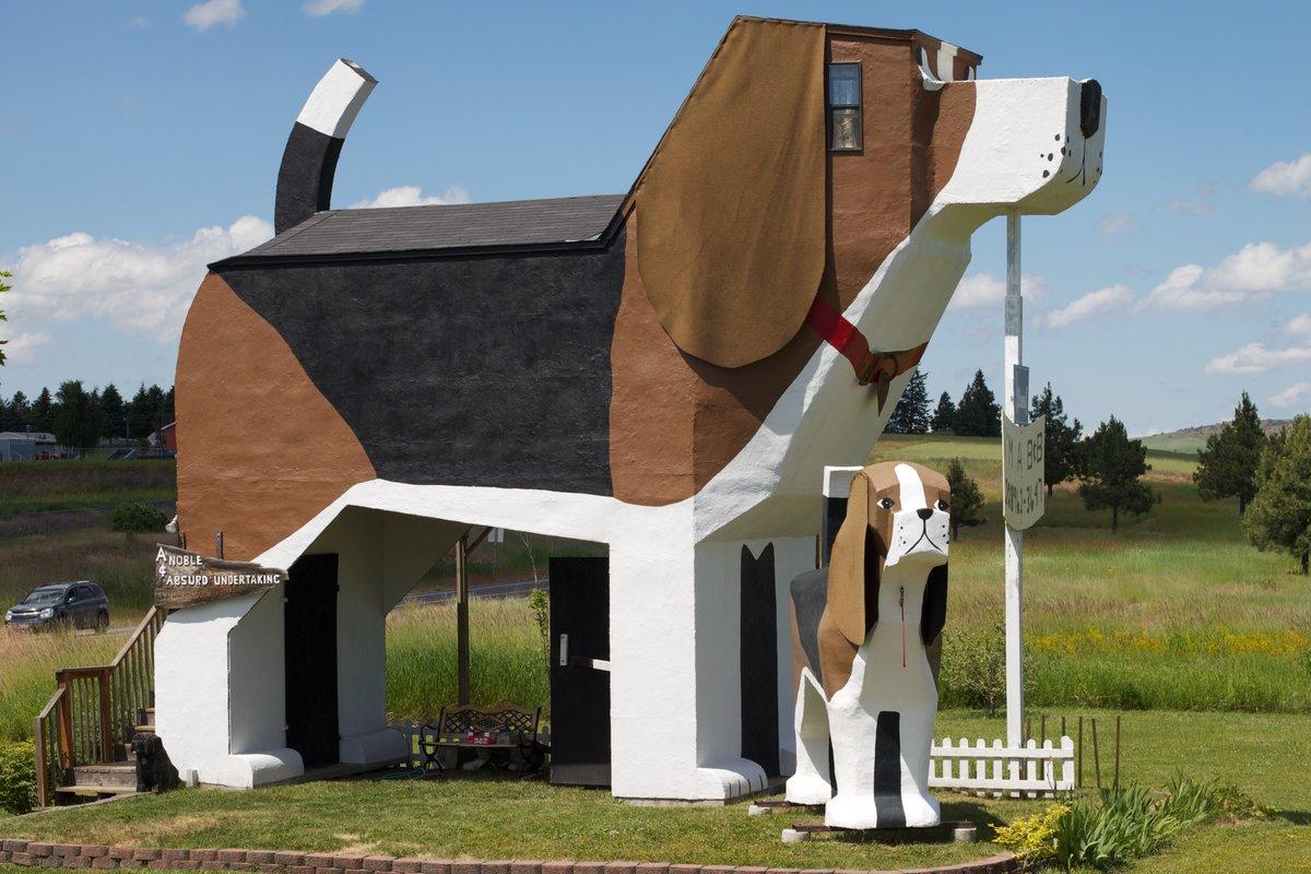 Смешные картинка дом, прикольные дятел вуди