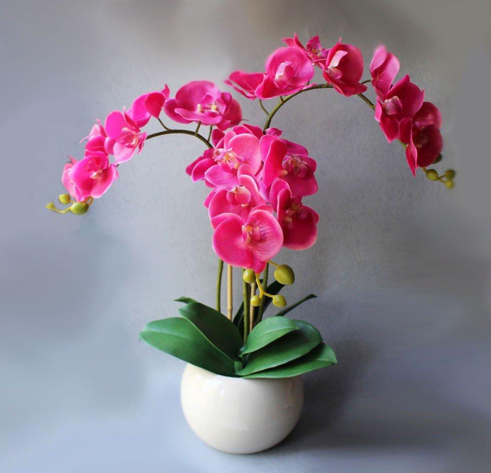 Уход комнатного цветка орхидея
