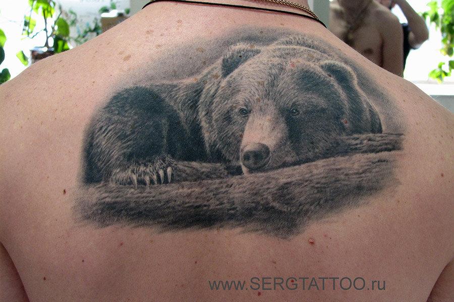 данной что означает картинка медведя жуткие фото-наклейки, которые