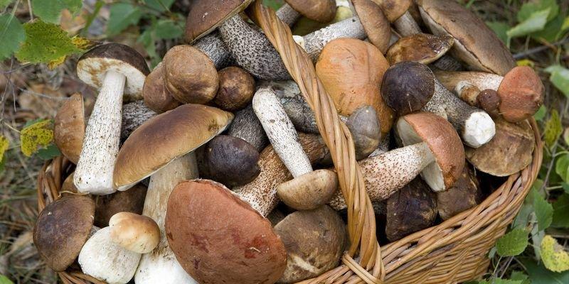 Причины возможного отравления грибами, а также советы, которые помогут избежать отравления.