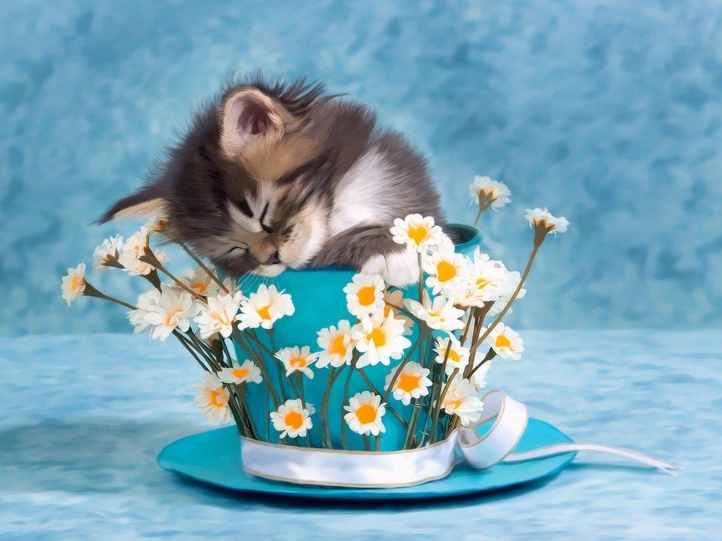 Открытка с цветами и котенком днем рождения