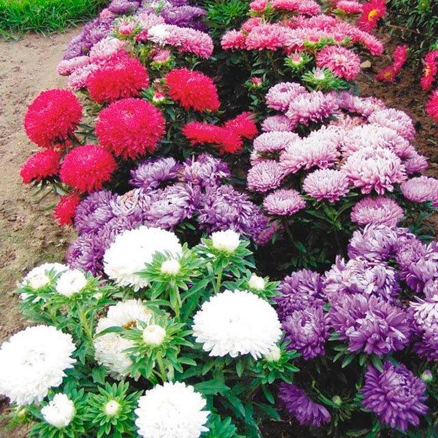 Купить многолетние цветы для дачи недорого спб