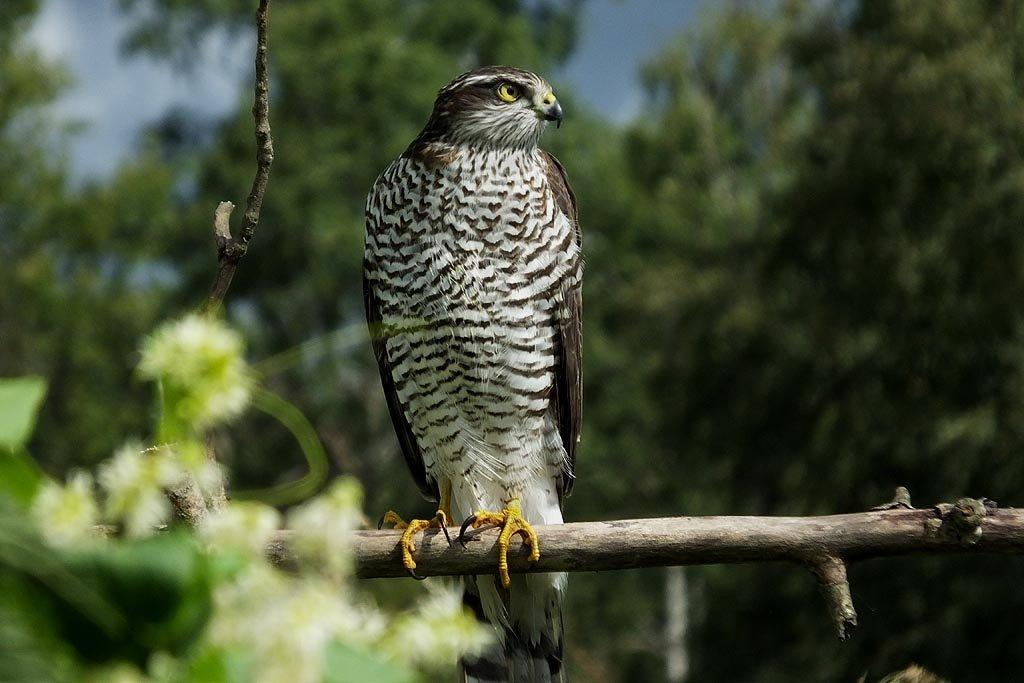 всю хищные птицы воронежской области фото с названиями это