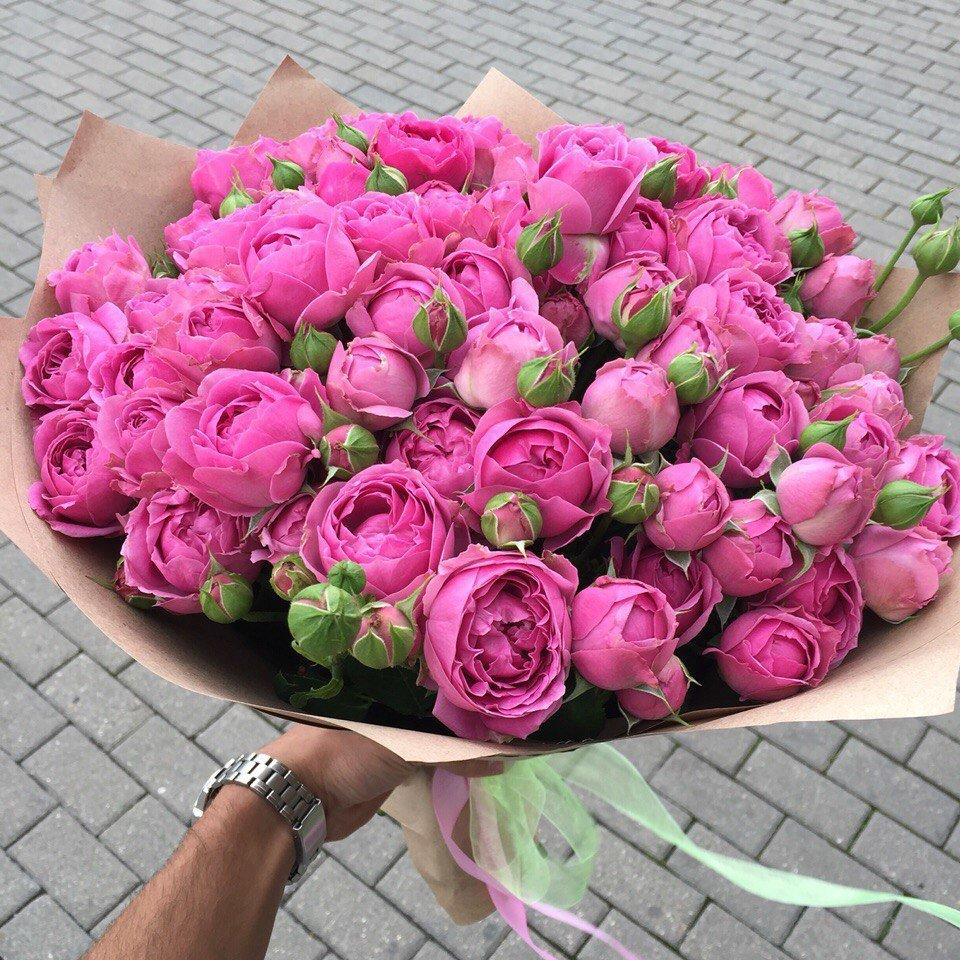 Розы пионовидные картинки 8