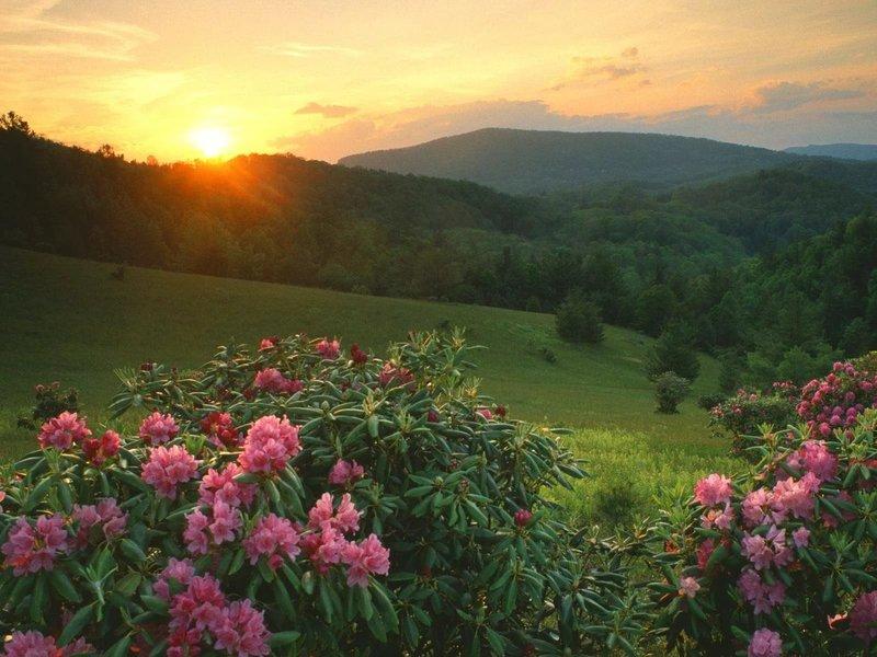 Сказочная природа и яркие цветы