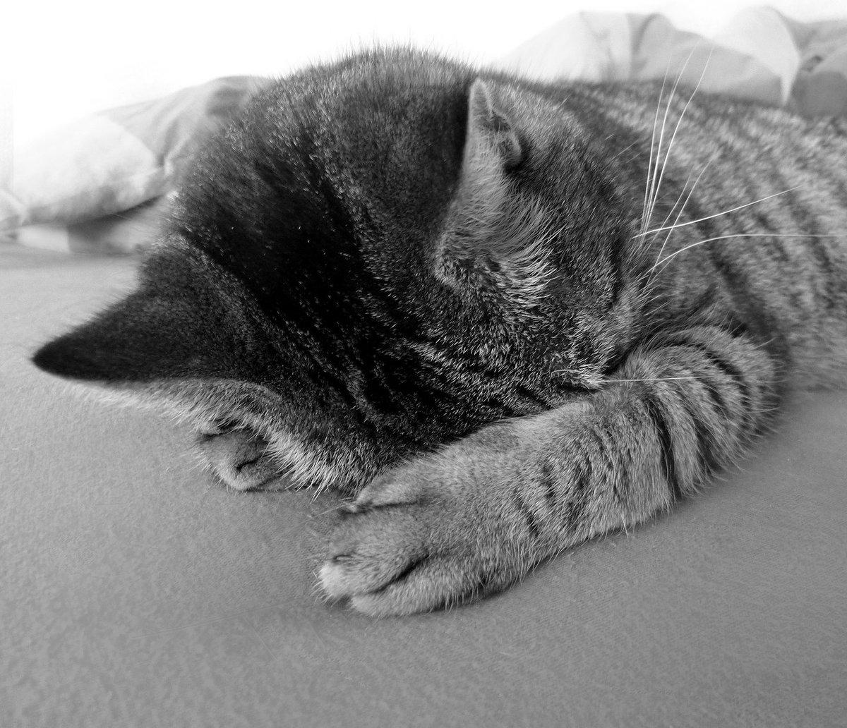 депрессивные коты фото очень любит пешие