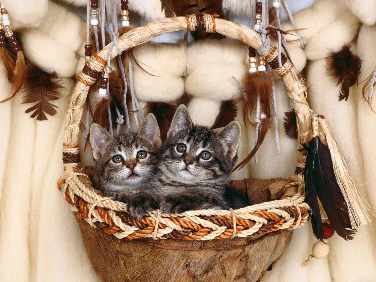 Картинки кошка с котенком в лукошке, картинки для компьютера