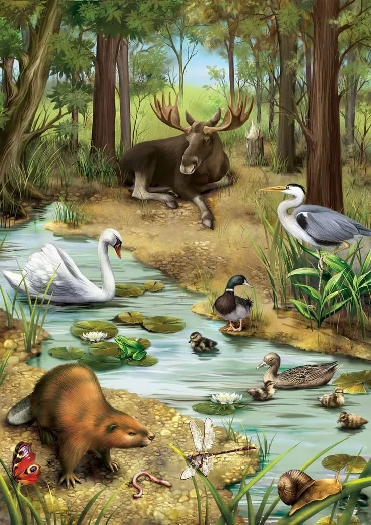 Птицы звери и леса картинки