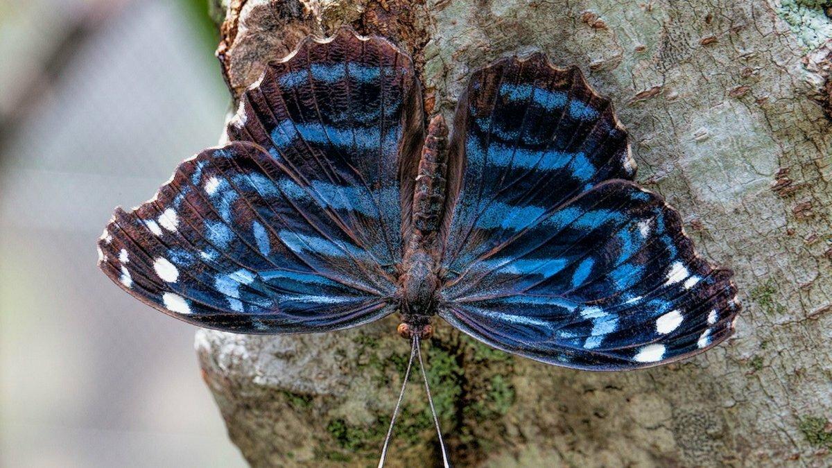Самые красивые бабочки фото