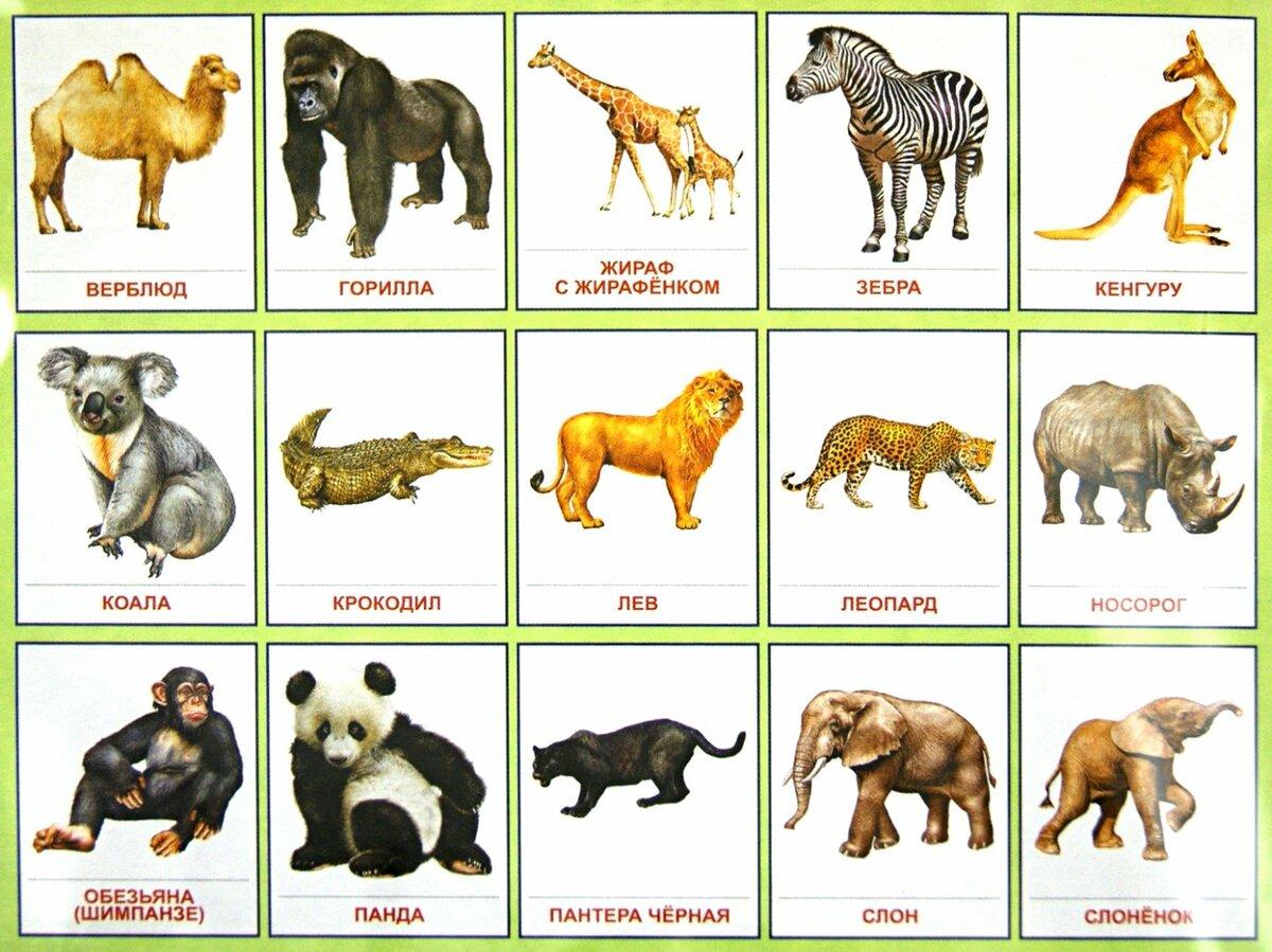 картинки зверей и название зверей интернет-пользователей заснял