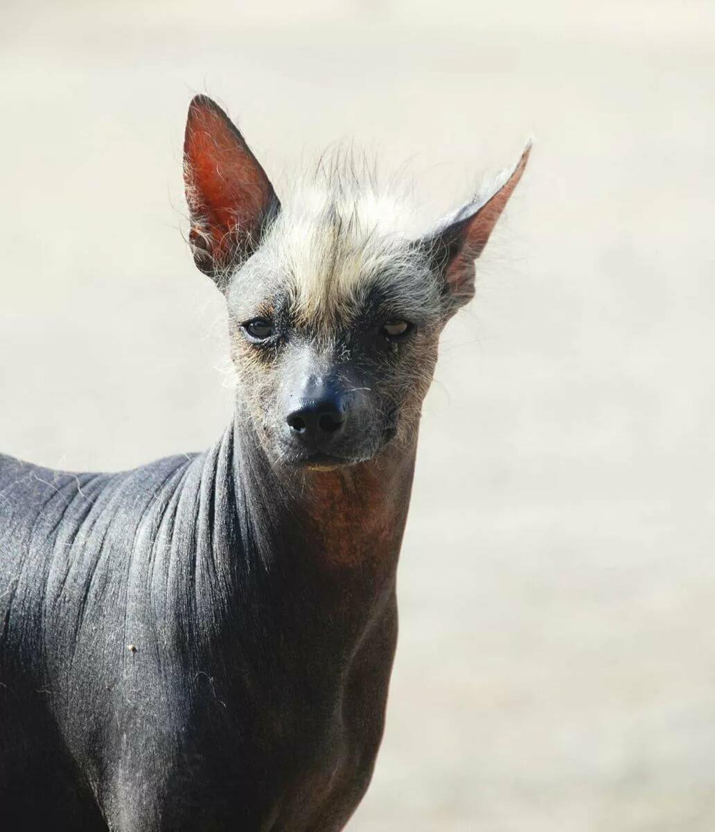уже самые редкие собаки в мире фото с названиями определили