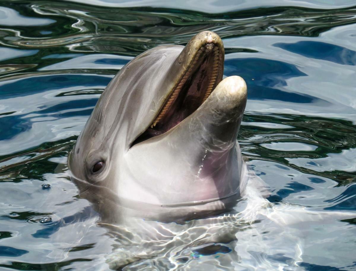 дельфины фото близко понять