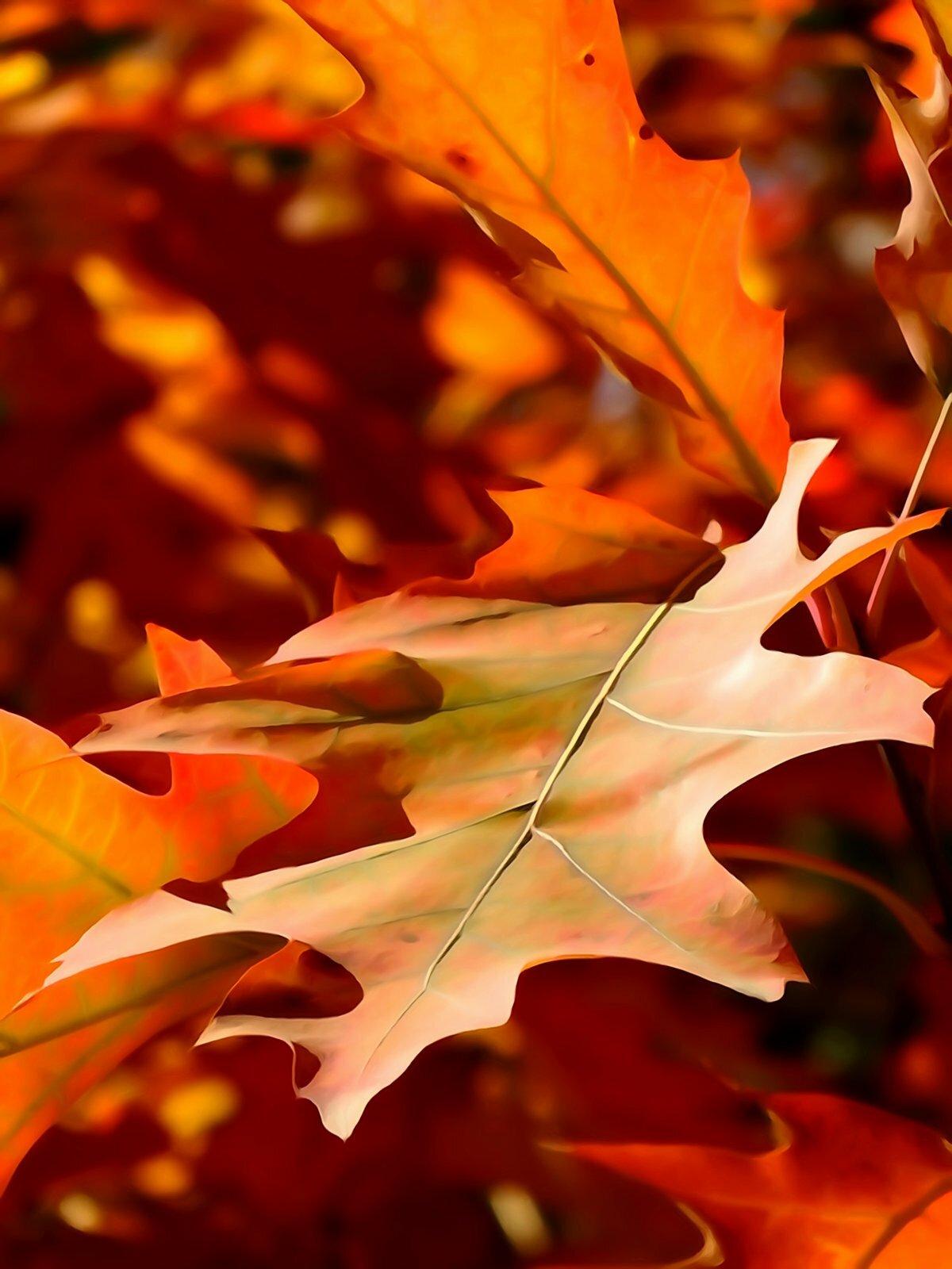 Картинки и листья осени