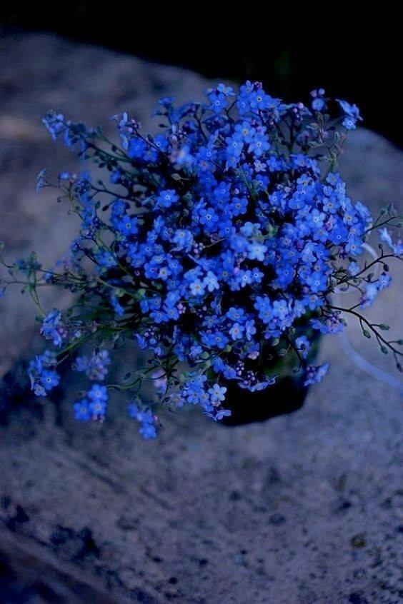 На изображении может находиться: растение, цветок, дерево, на улице и природа